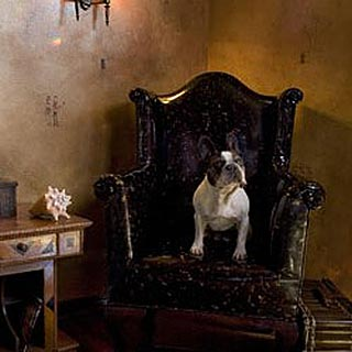 Dog Sitting in Chair | Kari Whitman